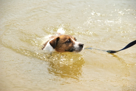別に泳ぎたくないよー
