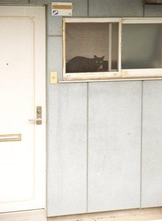猫さんは見た