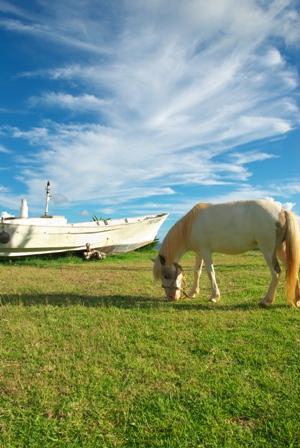 丘の船と馬