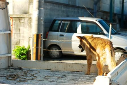 犬のトラック