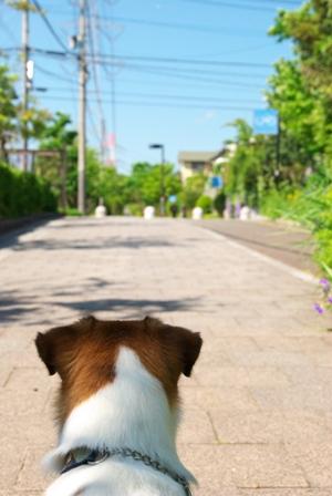 散歩道をみるハロ
