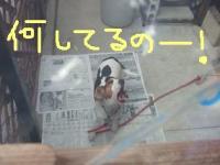 20071227_8.jpg