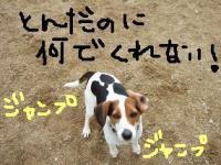 20080219_5.jpg