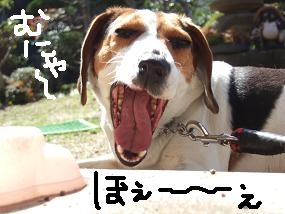 20080321_1.jpg