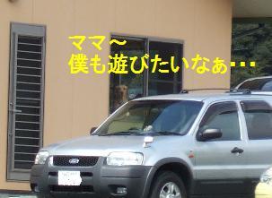 20080326_3.jpg