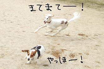 20080405_6.jpg