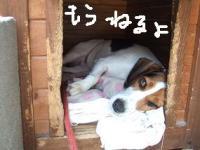 20080531_10.jpg