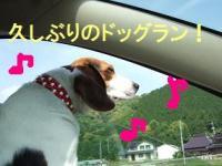 20080531_1.jpg
