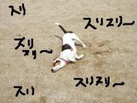 20080531_2.jpg
