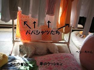 20061211230459.jpg