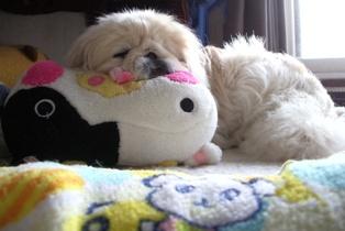 モーちゃん枕