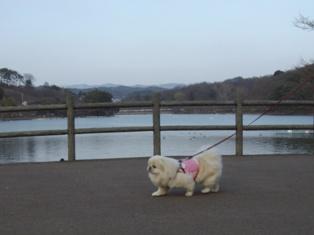 池のほとりを歩く