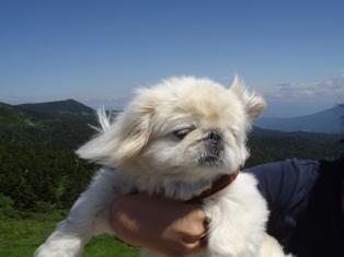 山の風に吹かれる
