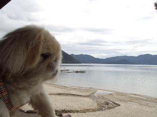 華IN田沢湖