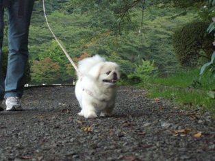 高松公園を歩く