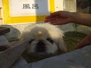 ちょペット風呂1