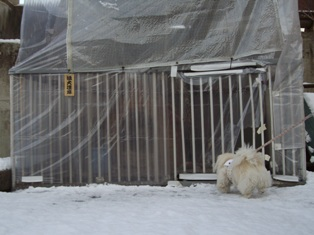 華VS猛犬