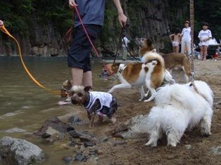 犬洗い状態