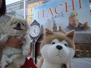 約束の犬HACHI