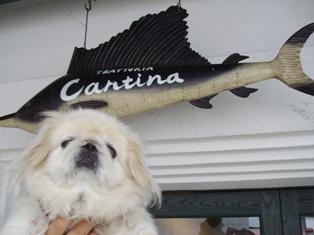 カンティーナ