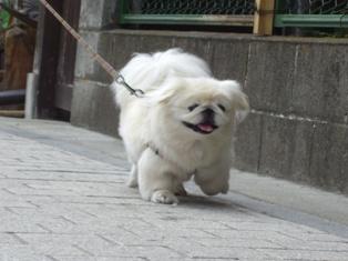 うれいら散歩