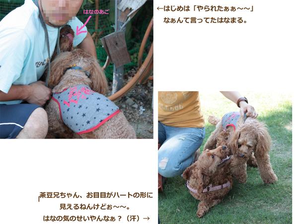 琵琶湖ドッグラン2