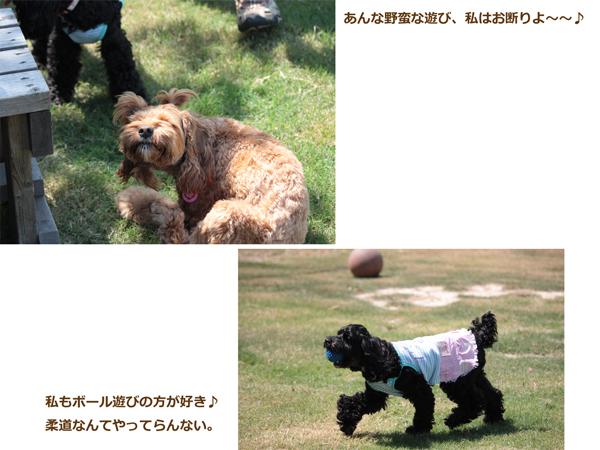 琵琶湖ドッグラン3
