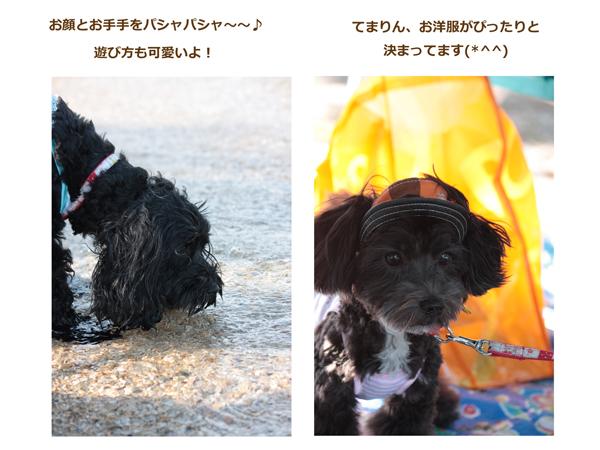 琵琶湖sakuてまちゃん