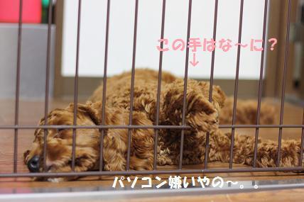 IMG_2721blog.jpg
