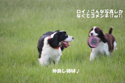 IMG_2908.jpg