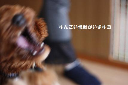 IMG_3137.jpg