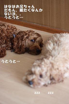 IMG_3152blog.jpg