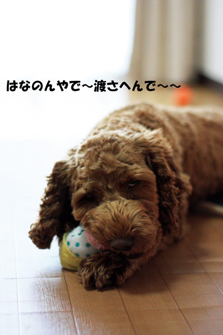 IMG_4587.jpg