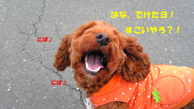 Image061.jpg