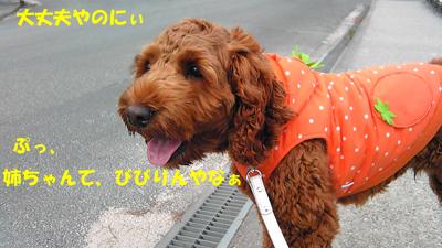 Image063.jpg