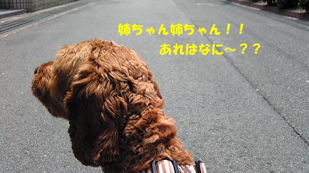 Image145.jpg