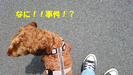 Image148.jpg