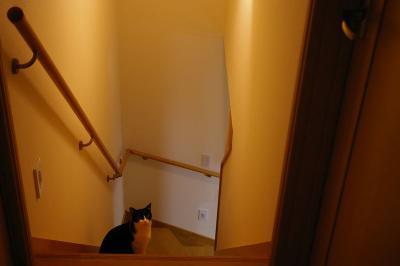 階段とダイ