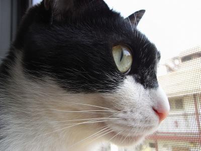 20080323_02.jpg