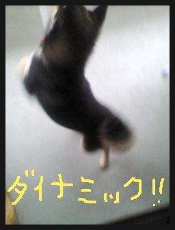image247244.jpg