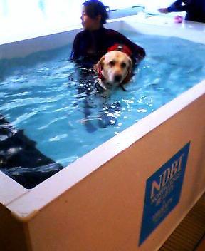 ハリー泳ぐ