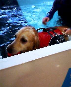 メリー泳ぐ