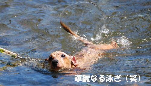 未来の泳ぎ