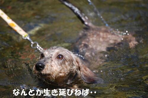 りっくんの泳ぎ2