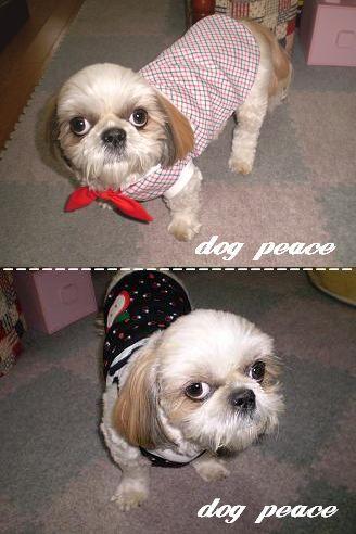 dogpeace.jpg