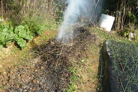 草木灰を作る