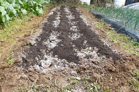有機石灰と鶏糞を鋤きこむ