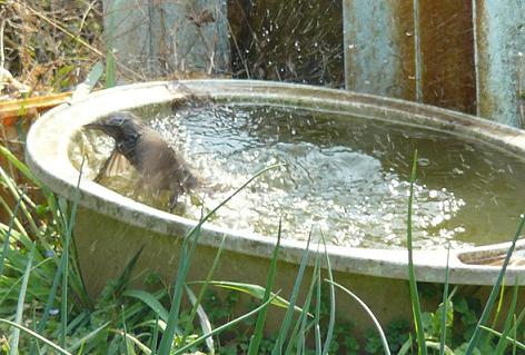腹いっぱいになったら、水浴びかい(`´)
