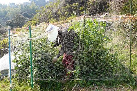 網にクマがかかった!?