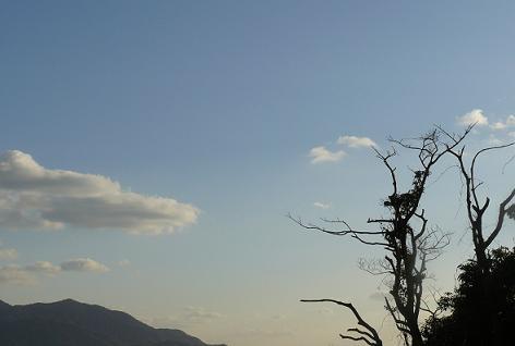 カラスの木と空と♪
